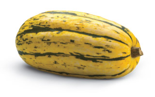 Guide to Squash - Delicata