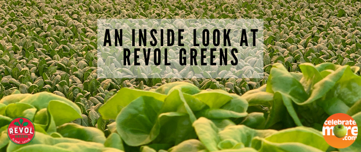 Revol Greens Greenhouse: An Inside Look at Local Greenhouse in Owatonna, MN